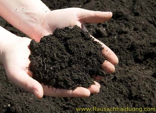 phân bón hữu cơ giúp cải tạo đất