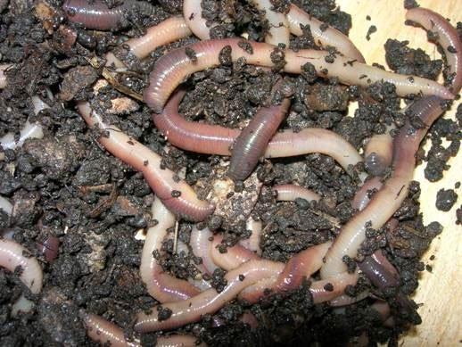 phân bón hữu cơ giúp tạo điều kiện cho vi sinh vật phát triển