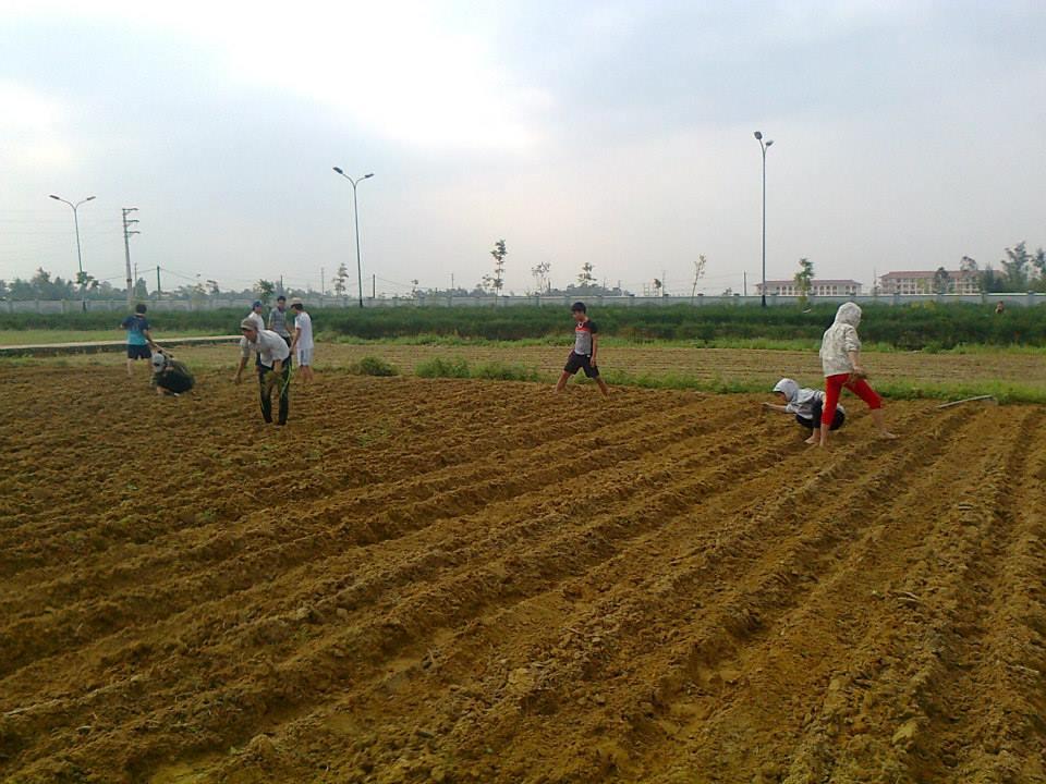 Làm đất, vệ sinh đồng ruộng sạch sẽ